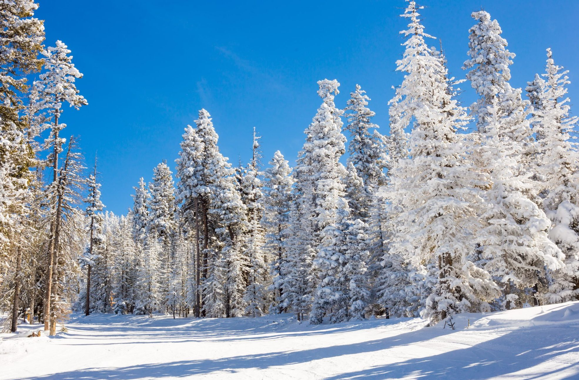 View at the ski slopes piste in the mountains of Angel Fire, New Mexico